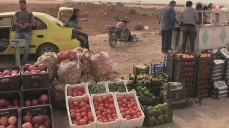 юге сирии разгаре сезон сбора урожая