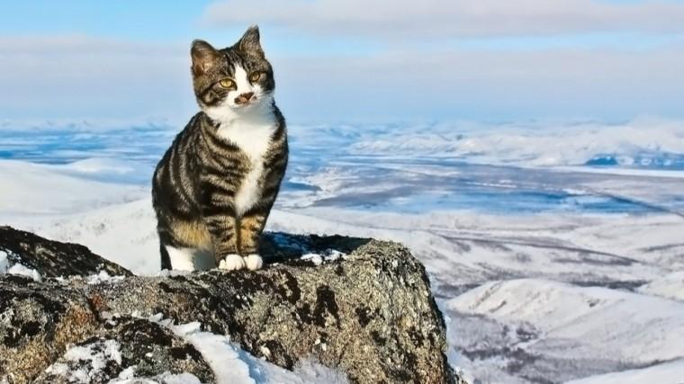 Видео: Умывающийся кот поджидал польских альпинистов высоко вгорах