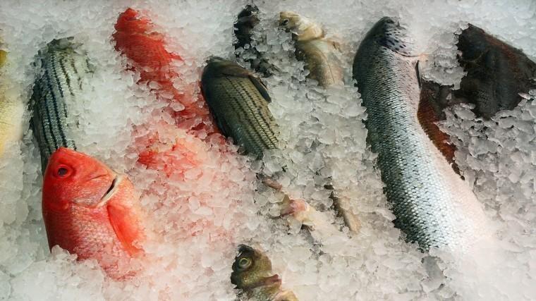 фестиваль дальневосточная рыба накормил ухой жителей приморья
