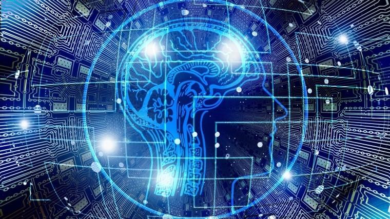 ученые раскрыли секрет высокого уровня интеллекта