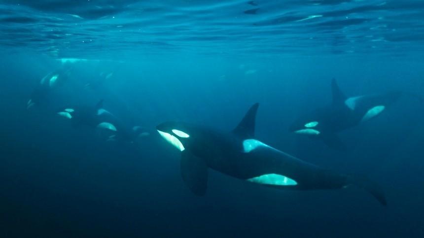 Организаторам «китовой тюрьмы» вПриморье назначили огромный штраф