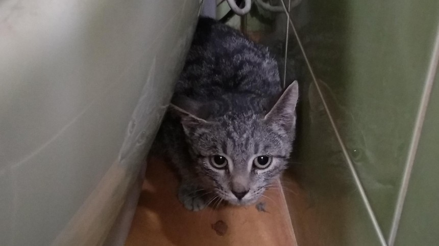 Видео: ВПетербурге спасли кота, просидевшего ввентиляции трое суток