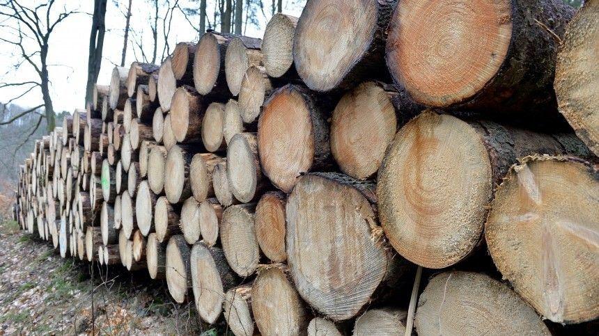 Сначала года вРоссии незаконно вырублено деревьев на9,4 миллиарда рублей