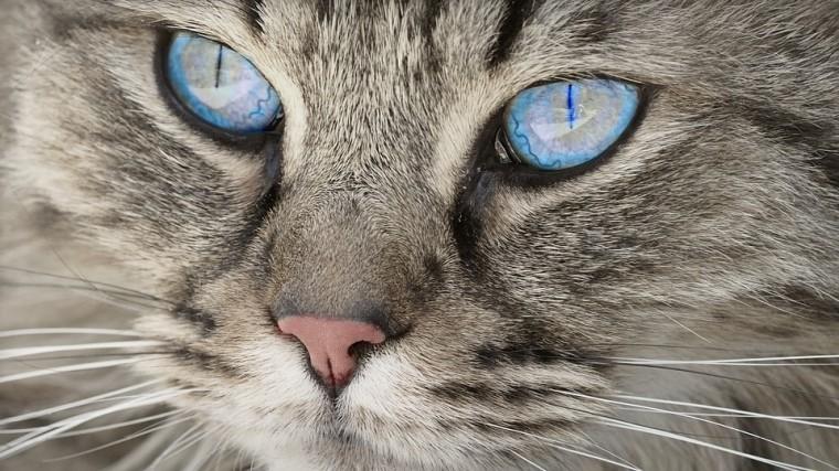 Стала известна любимая порода кошек уроссиян в2018 году
