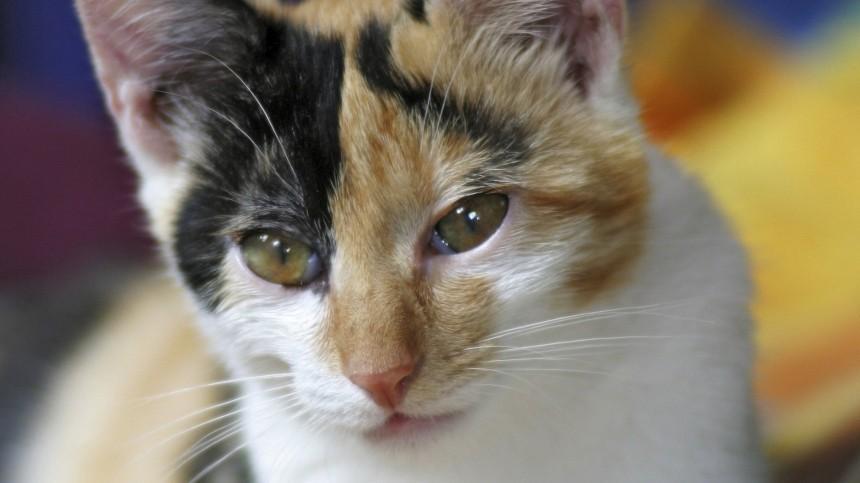 «Получил леща»: неудачная попытка котенка стянуть рыбу насмешила соцсети