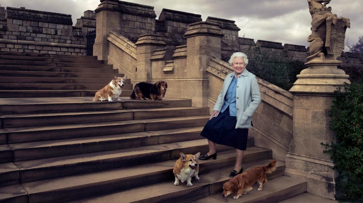 Королева Елизавета II и ее собаки в 2016-м