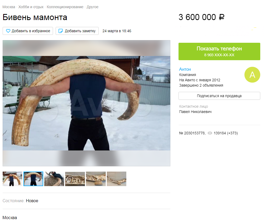 Москвич продает на«Авито» бивень мамонта за3,6 миллиона рублей