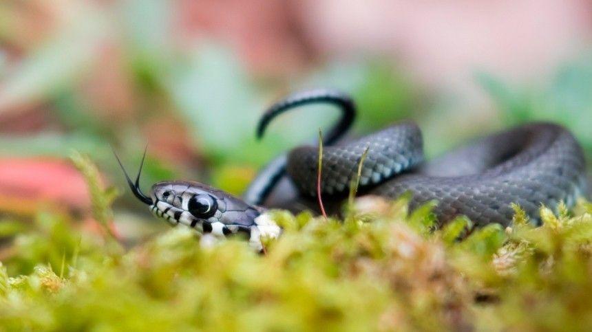 Змеиный праздник: что можно и что нельзя делать 12 июня