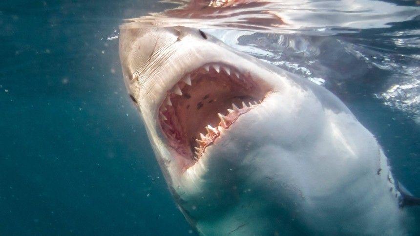 Уникальный случай: акула набросилась на крокодила в Австралии …