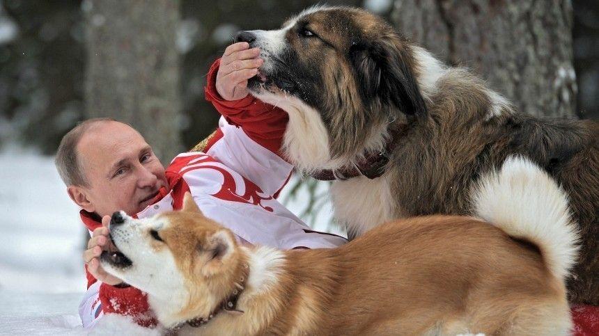 Как звали лабрадора Владимира Путина ипочему Елизавета II разводила корги?