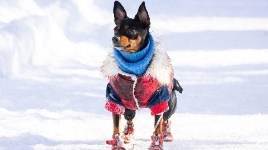 Кинологи рассказали, какие породы собак плохо переносят холодную погоду.