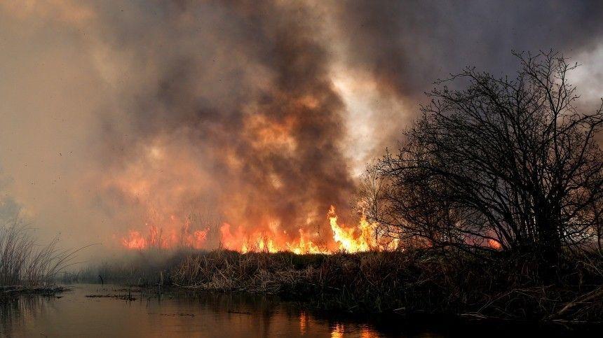 Прокуратура заинтересовалась последствиями мощного пожара в природном парке Хасанский