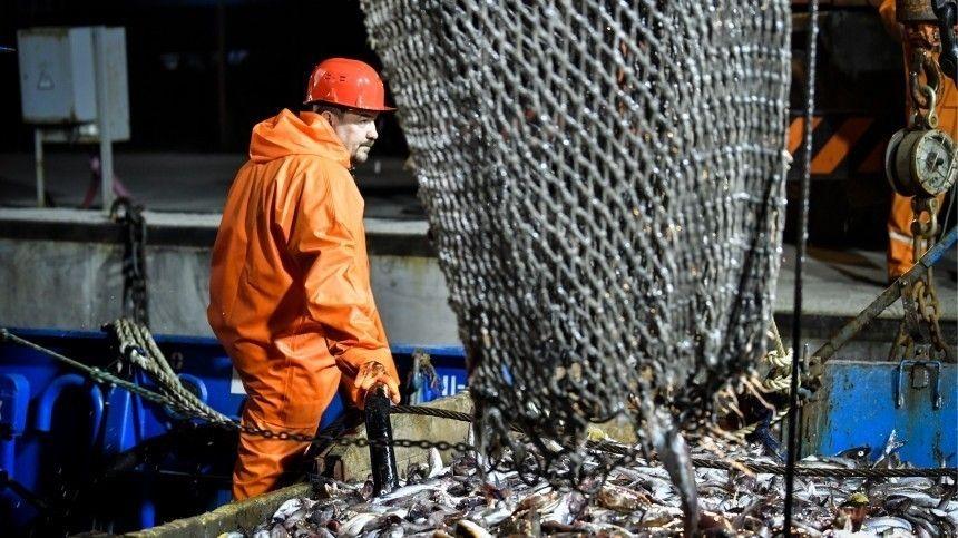 Стоимость килограмма морской рыбы в начале февраля на Дальнем Востоке составляла 65 рублей, а в центральной части страны — 85 рублей.