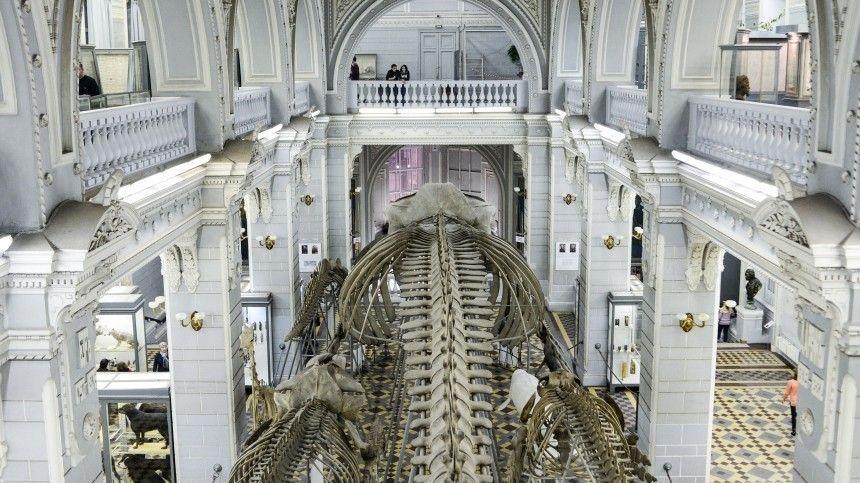 По подозрению в краже черепов из музея Петербурга задержали…