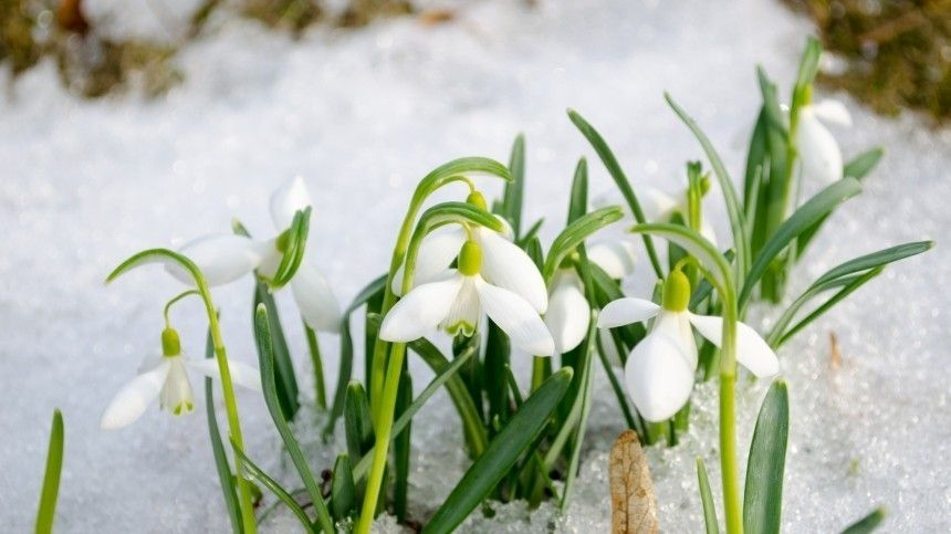 Аналитики назвали дату прихода весны в разные регионы…