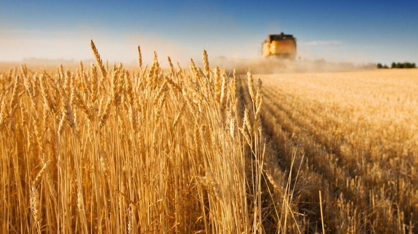 Пооценкам ученых, темпы развития сельского хозяйства вовсем мире сократились на21%.