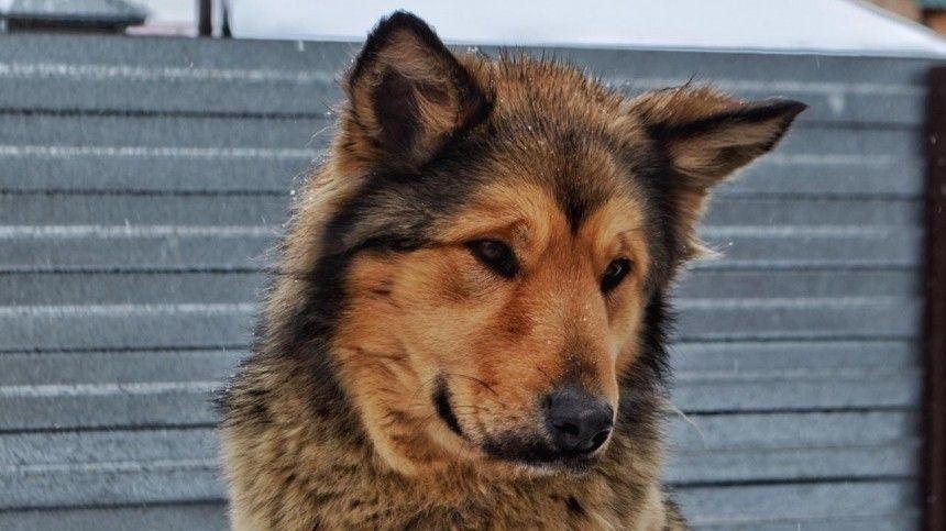 Собаки погибли при взрыве газового баллона в частном приюте в Кемерово  фото