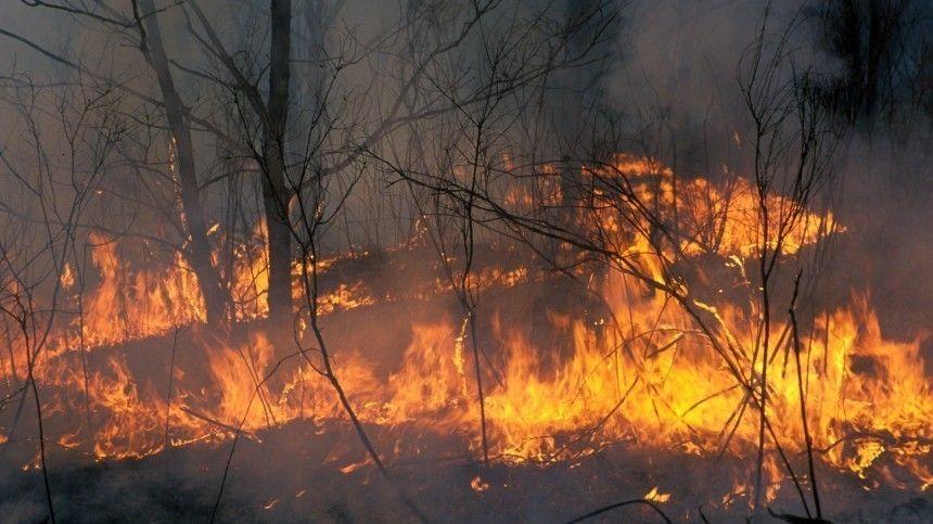 Природные пожары зафиксированы в ряде регионов России