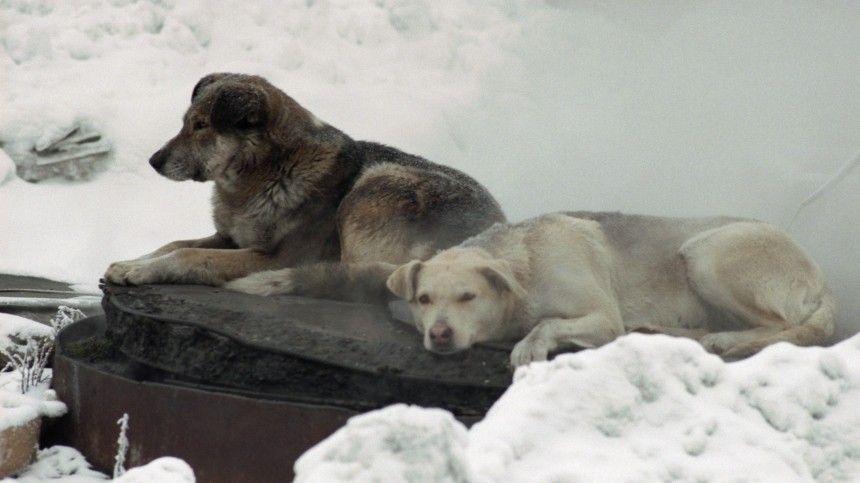 Насегодня встране работает 461 приют для безнадзорных животных.