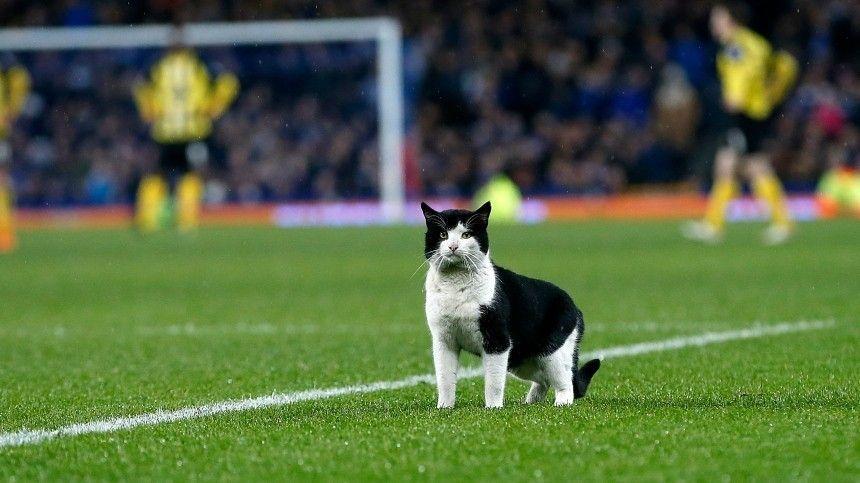 Видео: Кот выбежал на футбольное поле во время матча