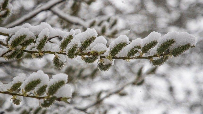 По самые помидорусы  весенний снегопад накрыл российские регионы