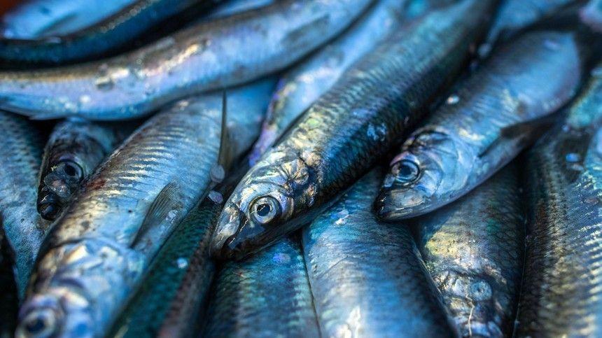 Почему нужно использовать исключительно цельную рыбу? Как проверить еенасвежесть?