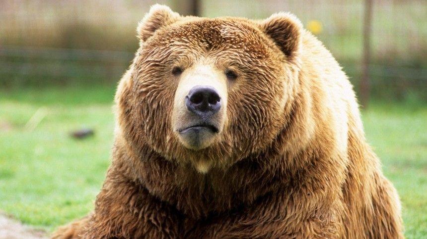 Видео: медведи устроили погром на заправке и спа-вечеринку в коттедже