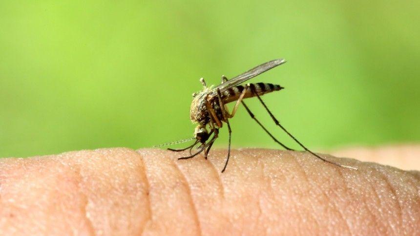 Помнению специалистов, новые виды насекомых появились из-за потепления климата.