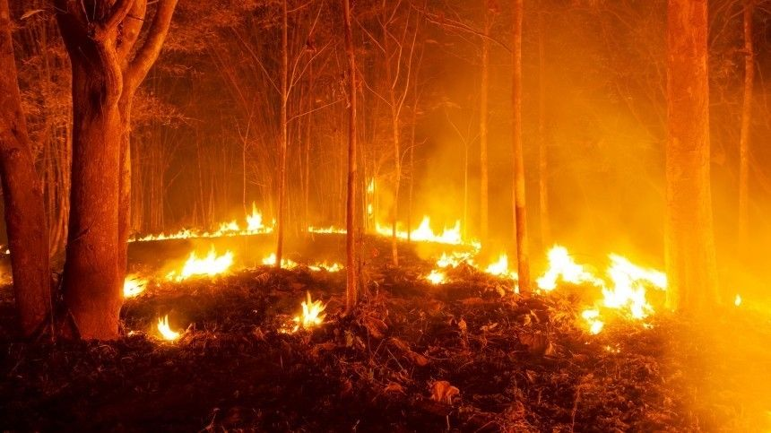 Сотни гектаров тайги полыхает в Мурманской области