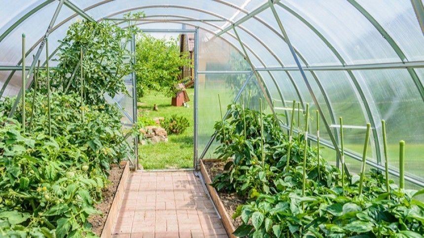 Как спасти растения при резком перепаде температур?
