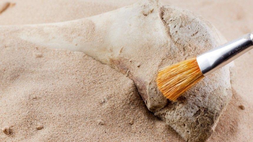 Стройка на костях: СК возбудил дело за осквернение воинских захоронений в Ленобласти