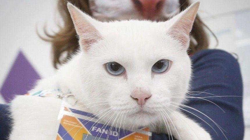Эрмитажный кот Ахилл предсказал поражение сборной России в стартовом матче Евро