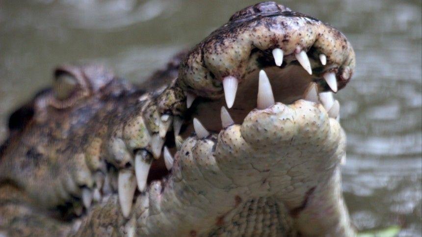 Сотрудники питомника буквально руками вытаскивали крокодилов иззатопленных зданий.