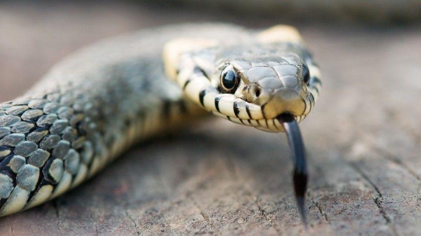 Бояться нечего Эксперт прокомментировал нашествие змей на Азовском море