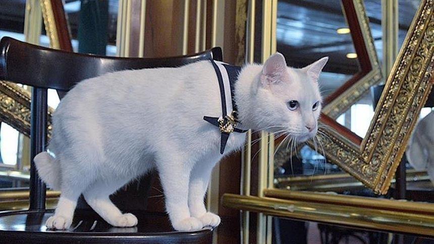 Зачем российские моряки назвали кошку Собакой? Кто оправдал ожидания российских болельщиков на«Евро-2020»?