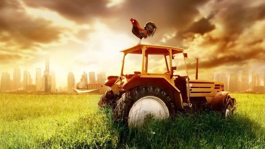 Вчисле главных условий развития сельских территорий называются приток молодежи, развитие производства истимулирование бизнеса.