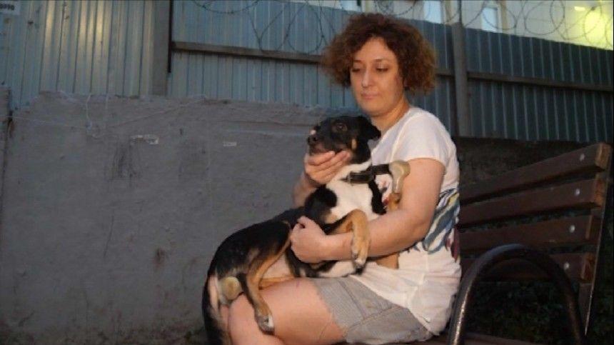 Всем миром: благодаря неравнодушным людям зоозащитникам удалось спасти собаку, потерявшую две лапы.