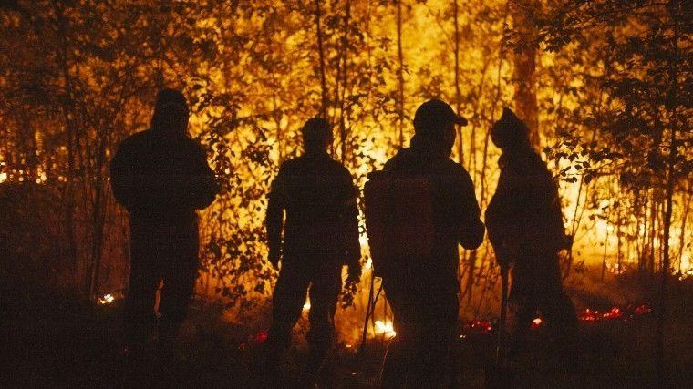 Лесные пожары— аномалия илинет? Чем они опасны для атмосферы? Истанутли они предвестниками экологической катастрофы?