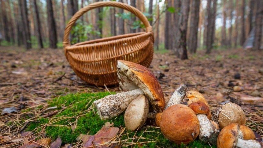 Почему ночью искать грибы проще? Как быстро отчистить ножку гриба отгрязи?