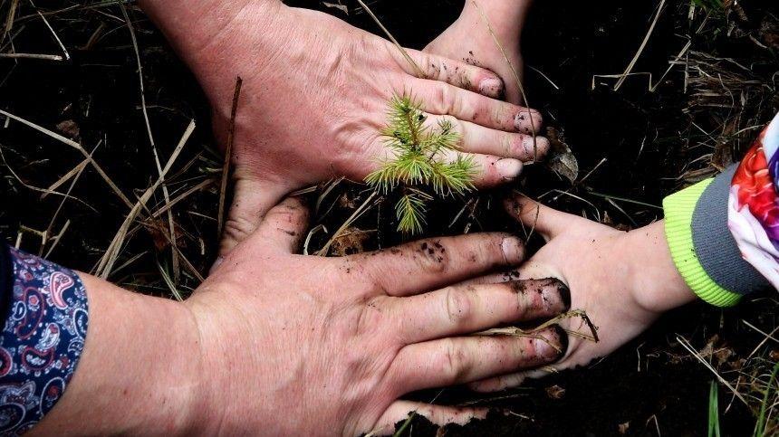 Более пяти тысяч деревьев высадили в Иркутской области в рамках экомарафона