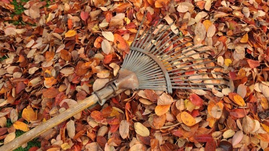 Как соорудить безопасный прибор для сжигания листьев? Иизкаких старых вещей можно сделать измельчитель веток?