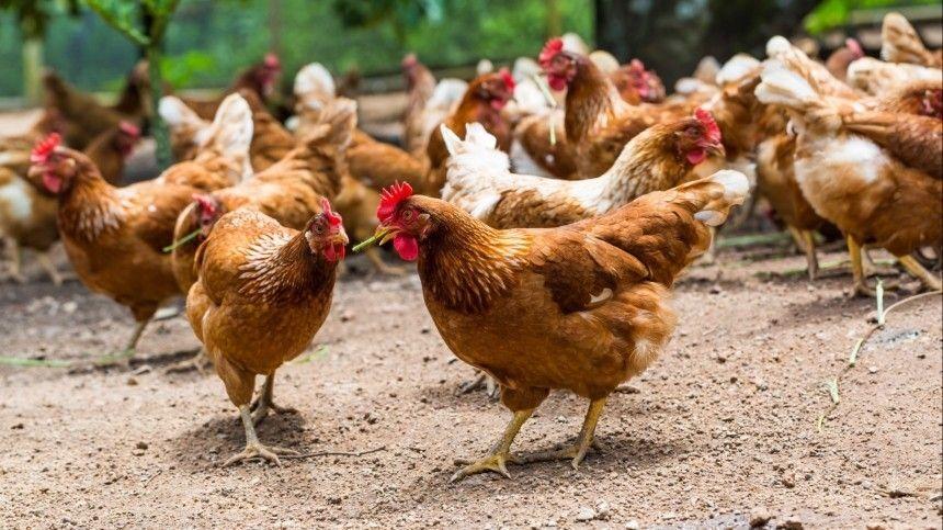 Верховный суд постановил, что заразведение сельскохозяйственных животных нанепредназначенной для этого территории будет облагаться штрафом.
