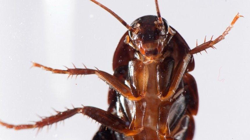 Полчища огромных насекомых держат жильцов дома встрахе, оккупировав потолок первого этажа.