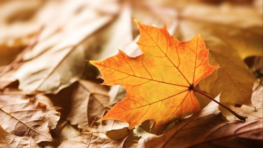 Листья-убийцы Какие болезни провоцирует шуршащая осенняя листва