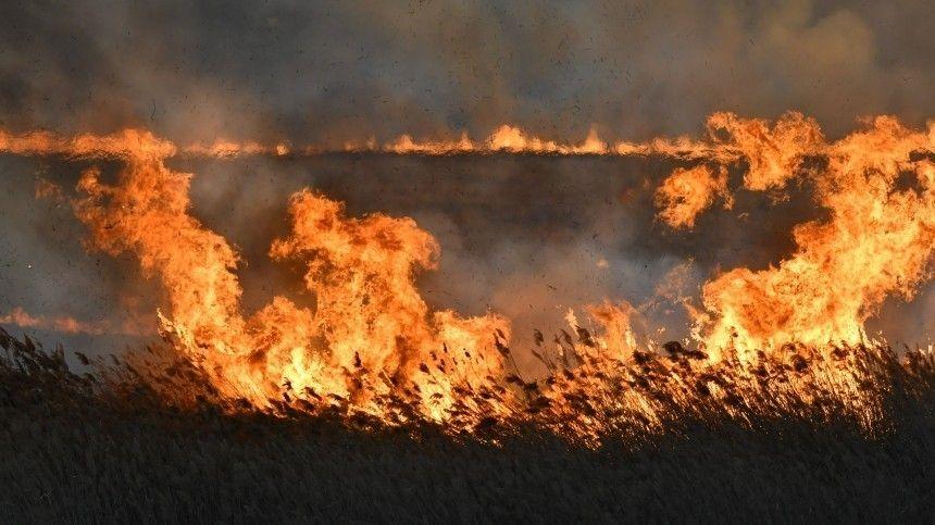 Чтобы локализовать возгорание сухой травы, пожарным потребовался неодинчас.